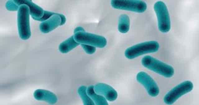 animação de bactérias azuis