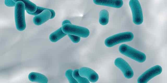 bactérias multirresistentes