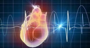 imagem digital de um coração e o ciclo cardíaco