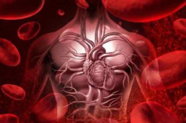 animação do sistema circulatório e sanguineo humano