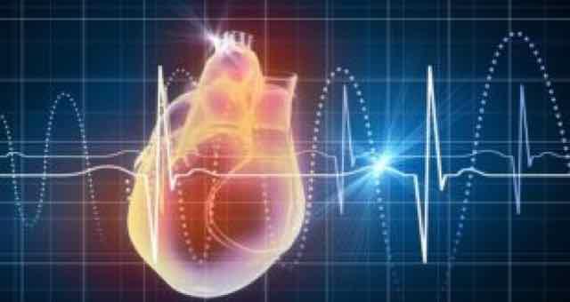 coracao e batimentos cardiacos