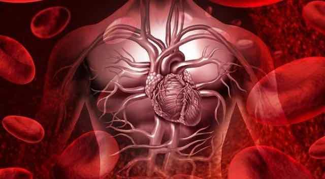animação da corrente sanguinea a sistema cardiovascular humano