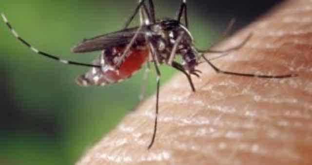 mosquito picando pele humana