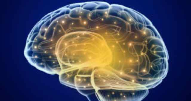 cérebro em 3d