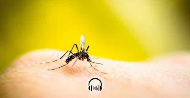 mosquito pousado na pele de uma pessoa