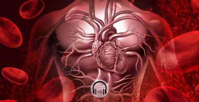 animação do sistema circulatório humano