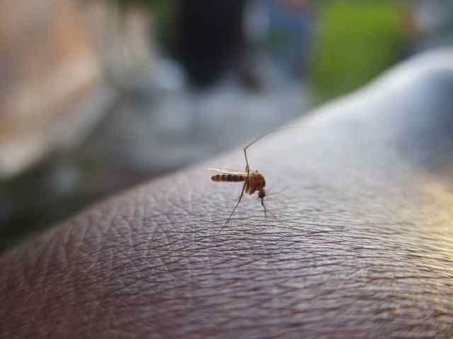 close de um mosquito pousado na mão de indivíduo