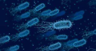 bactérias