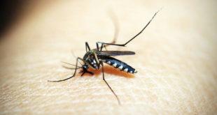 dengue e zika