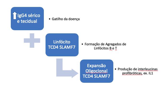 imunoglobulina IgG4