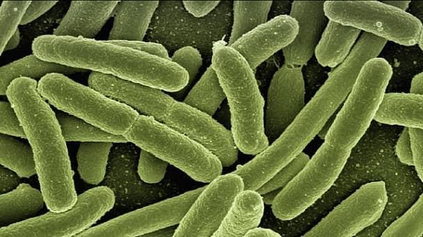 microrganismos vivos representando probioticos