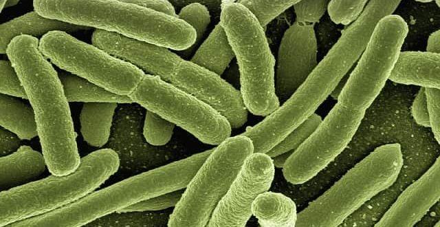 A bactéria Klebsiella pneumoniae carbapenemase foi encontrada na urina de 48 pessoas diagnosticadas com infecção urinária