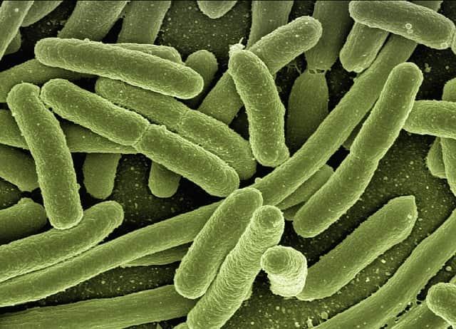 bactérias Pseudomonas aeruginosa
