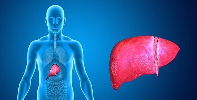 ilustração de figado com hepatite e