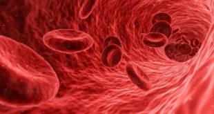 imagem digitalizada de sangue com os glóbulos vermelhos, onde acontece a policitemia vera