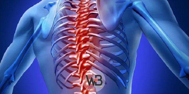 imagem digitalizada de corpo humano, com foco na coluna e costelas, representando a dor lombar