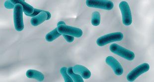 bactéria h. pylori em imagem digitalizada, causadora da metaplasia gástrica