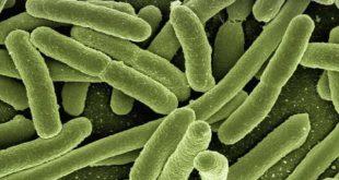 enterobactérias em imagem digital resistentes a antimicrobianos, com possibilidade de cefepima