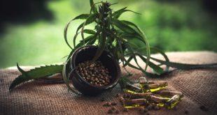 folha de cannabis com canadibiol extraído para fins medicinais