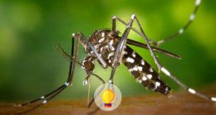 mosquito causador da dengue