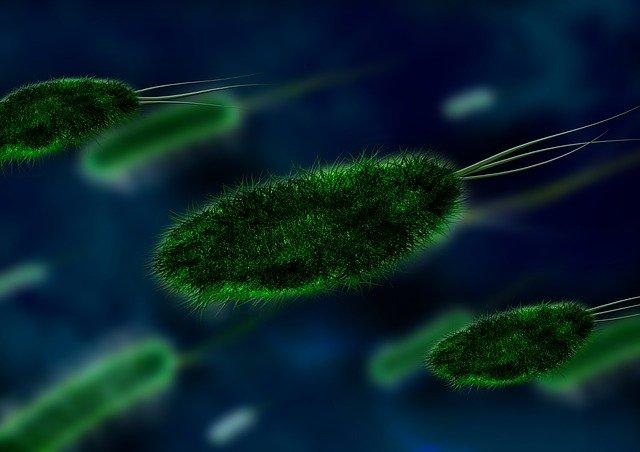 bacteriúria assintomática em imagem digital