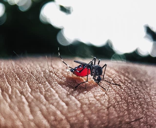 mosquito aedes aegypti em mão de pessoa com degue