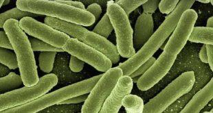 Bactérias são combatidas com antibioticoterapia com cuidado para que não se desenvolvam bactérias resistentes ao tratamento.