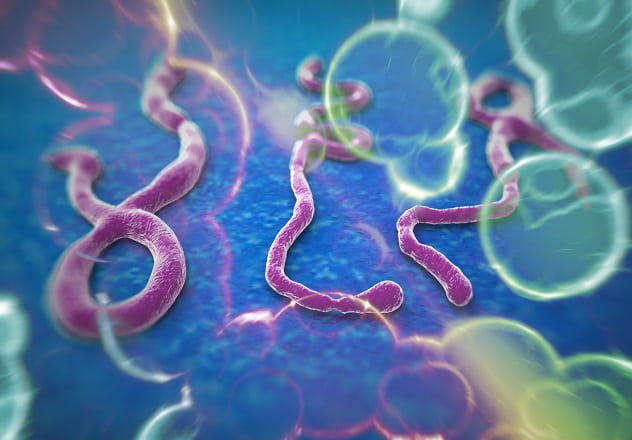 vírus ebola em imagem de microscópio