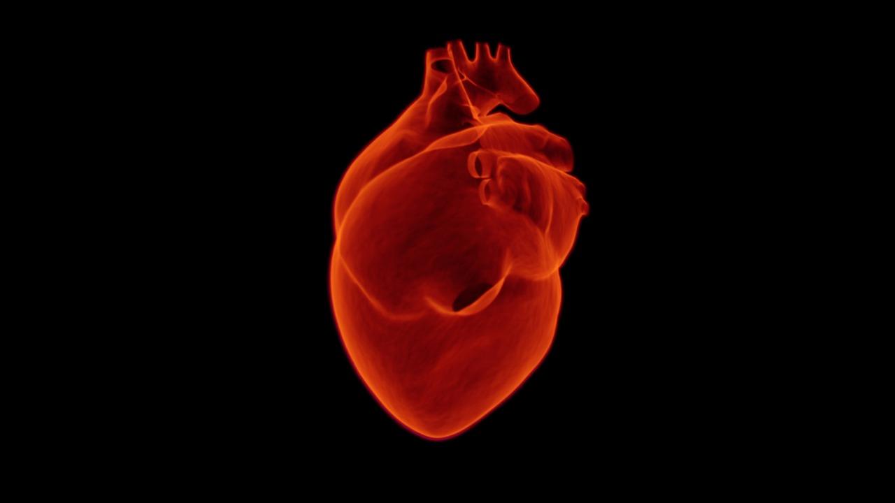 Representação gráfica de um coração que pode sofrer de Insuficiência cardíaca devido a anormalidades no nível de potássio