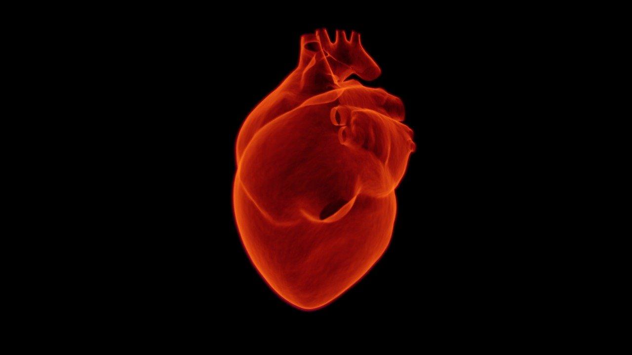 Representação gráfica de um coração que pode sofrer infarto esplênico