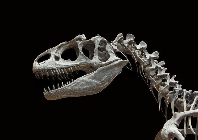 História da medicina: cientistas descobriram a presença de osteossarcoma em fóssil de dinossauro
