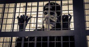 Unidades prisionais apresentam risco aumentado de infecção em um cenário de pandemia
