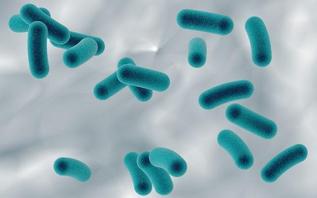 organismos causadores de infecções sexualmente transmissíveis
