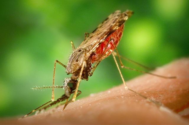 mosquito transmissor da malária